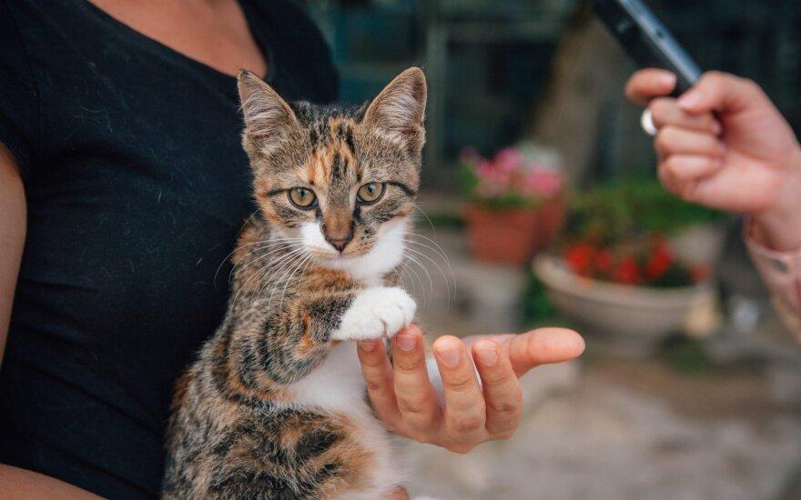 Miela raina katytė ieško namų