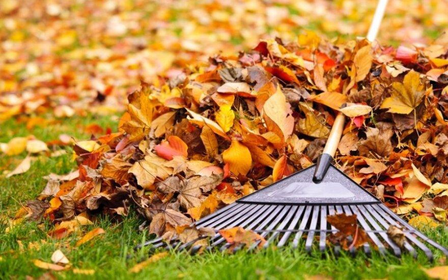 Iš sostinės gatvių jau išvežta beveik 2 tonos lapų