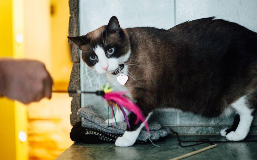 """Kačių elgsenos ekspertė pataria: kaip elgtis, <span style=""""color: #c00000;"""">jei katė vengia</span> svečių"""
