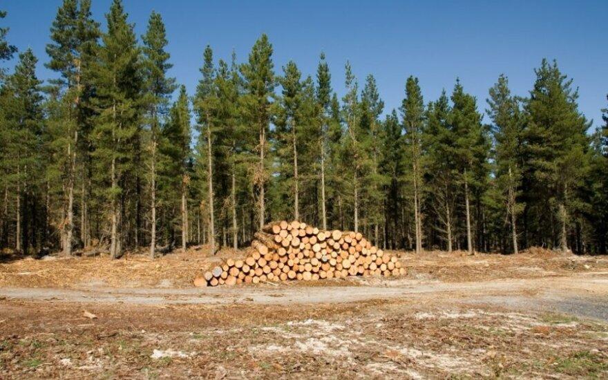 Kovoje su nelegaliais kirtimais miškų inspektoriams suteikta daugiau teisių