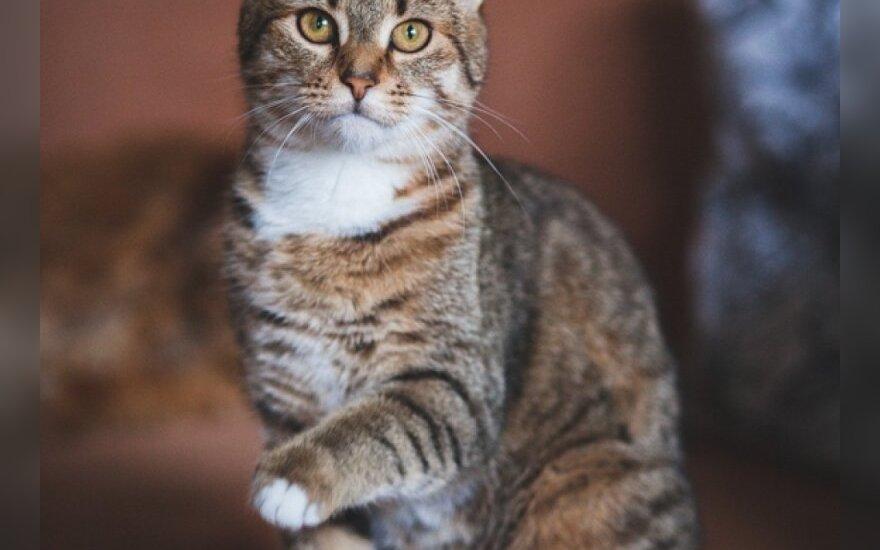 Dovanojama 6 mėn. katytė