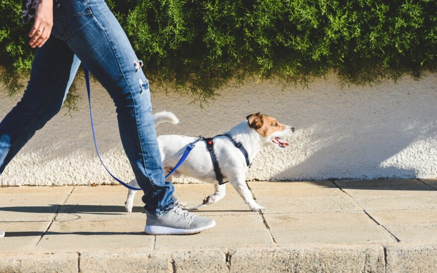 Šioje šalyje daugiau nei dvigubai padaugėjo šunų vagysčių: paprasti patarimai, kaip išvengti augintinio praradimo