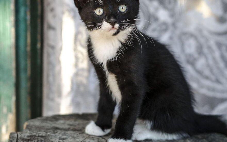 Kaime iš mirties nagų ištraukti kačiukai ieško namų