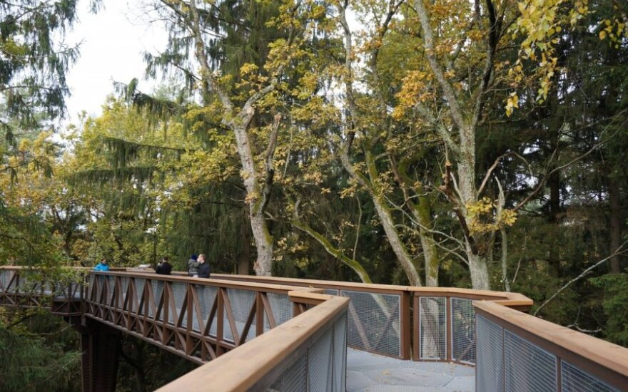 The treetop walkway in Anykščiai
