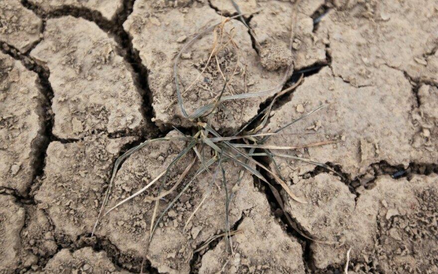 Lietuvoje prasidėjo didžiulė sausra