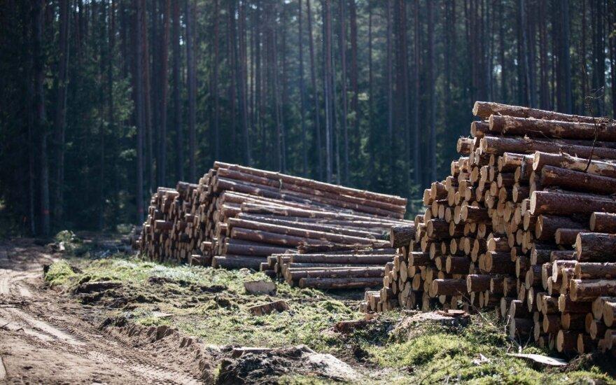 Kita ažiotažo dėl miškų pusė: kirsti daugiau skatina elementarus ekonomikos dėsnis
