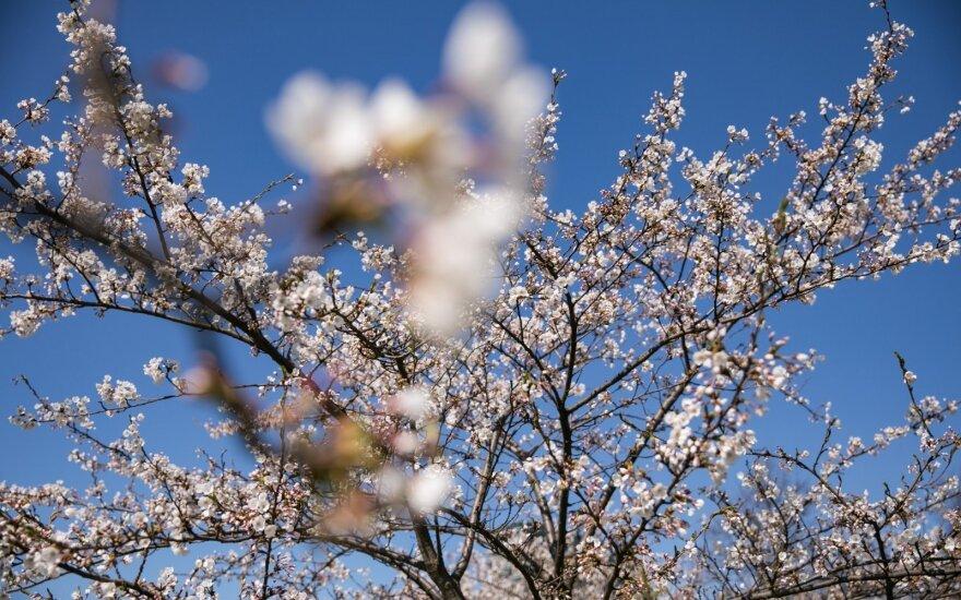 Sinoptikai turi gerų naujienų: po pūgos ir šlapdribos – šilumos banga ir optimistinė pavasario prognozė