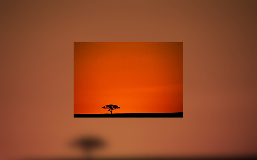 Vienišas medis
