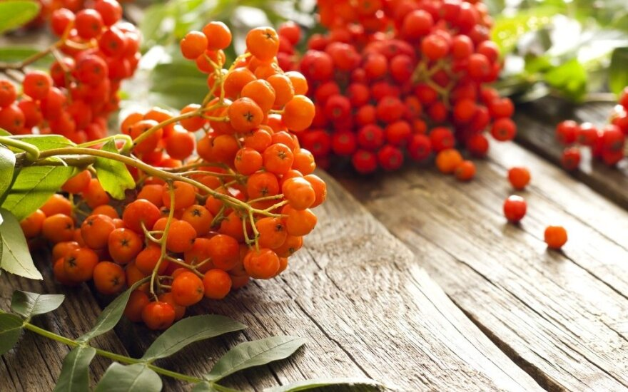 Šermukšnių uogos - tikra vitaminų bomba