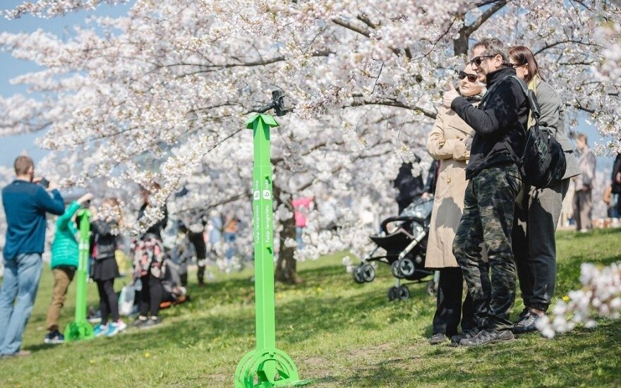 ФОТО: для фотосессий у сакур установили специальные штативы