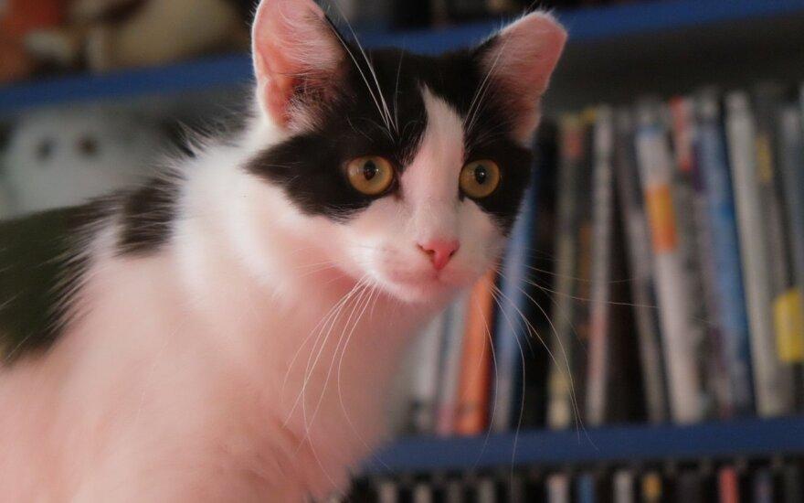 Tobula katytė Beata ieško jaukių namų!