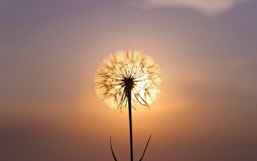 Astrologės Lolitos prognozė lapkričio 23 d.: išminties diena