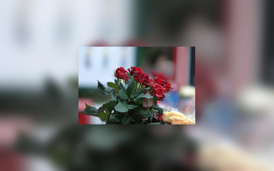 Gėlės, rožės
