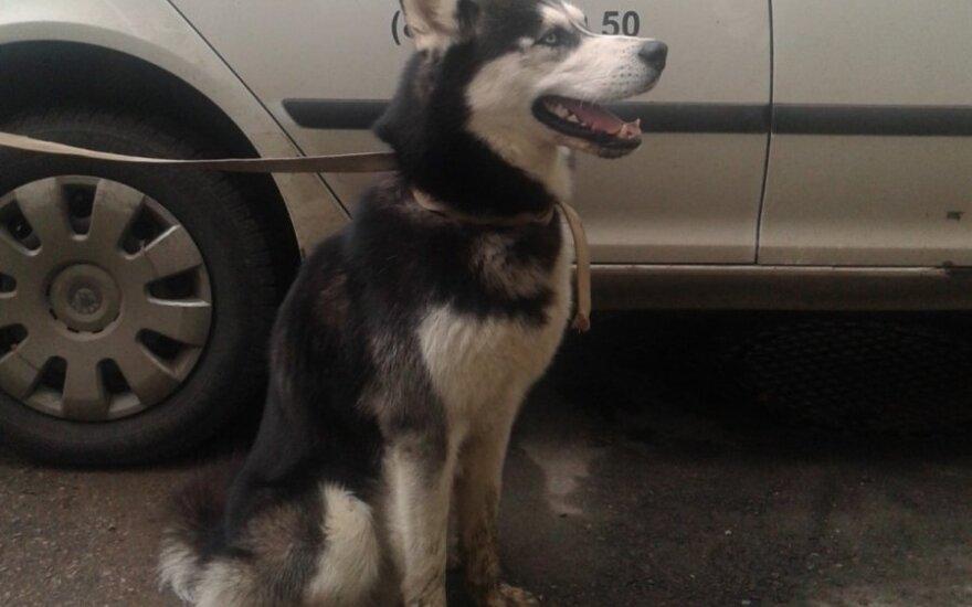 Policija ieško šuns šeimininkų