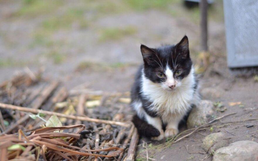 Kačiuko Malvio prašymas išgelbėti gyvybę