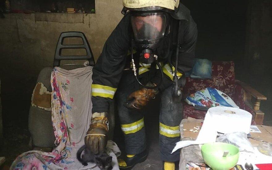 Gesindami degantį namą Vilniaus ugniagesiai išgelbėjo 9 beglobius kačiukus