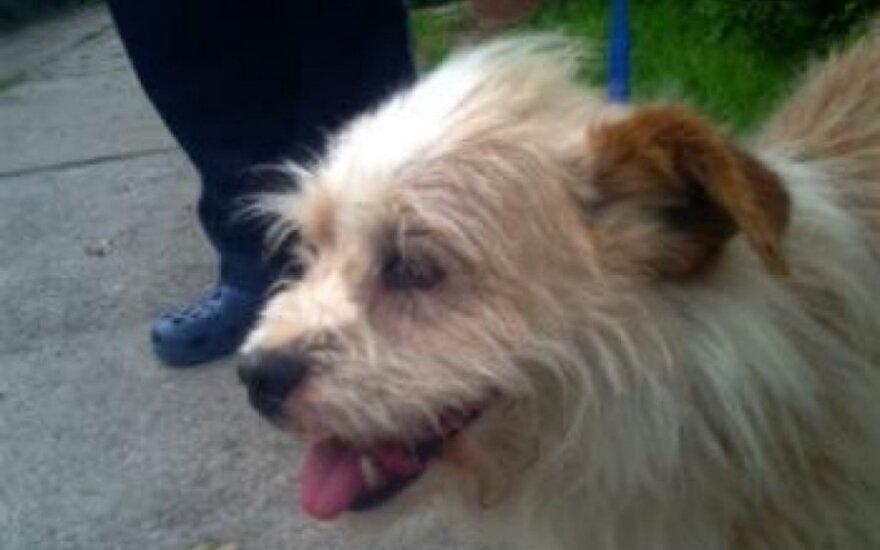 Pagalbos šauksmas iš Stakliškių: šunelis Barkis ieško namų
