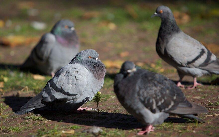 Atradimas, sukėlęs sąmyšį: paukščiai primena šį tą baugesnio