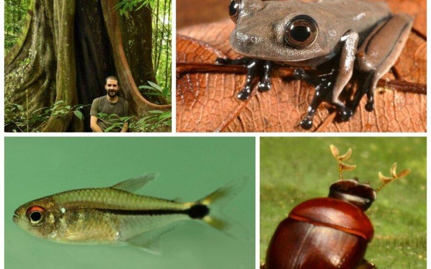 Naujos atogrąžų miškuose atrastos gyvūnijos ir augalijos pasaulio rūšys