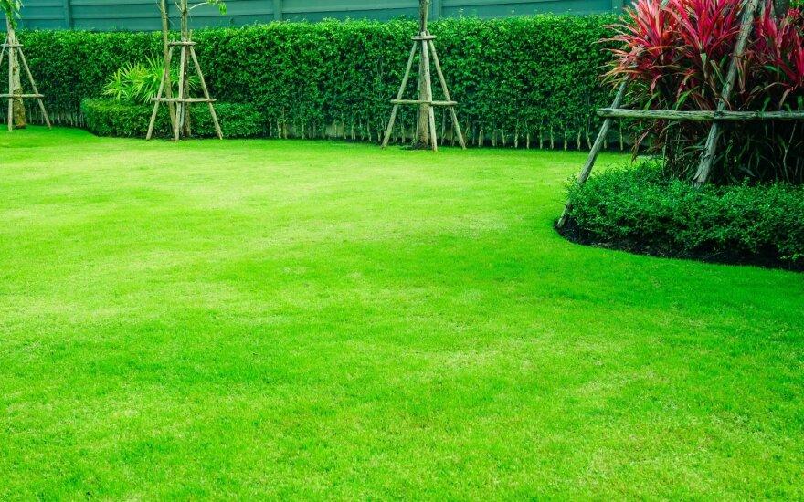 Pagrindinės gražios vejos taisyklės