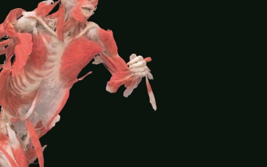 """Žmonių plastinatų paroda """"The Human Body Exhibition"""""""
