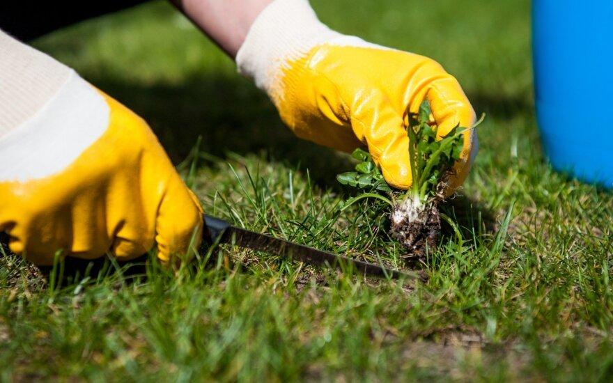 Atsikratome piktžolių – apie kai kuriuos mulčiavimo būdus turbūt net nežinojote