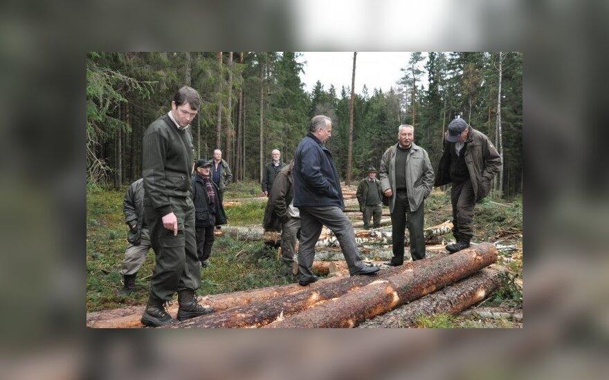 Vokiečiai žavėjosi lietuviškais miškais