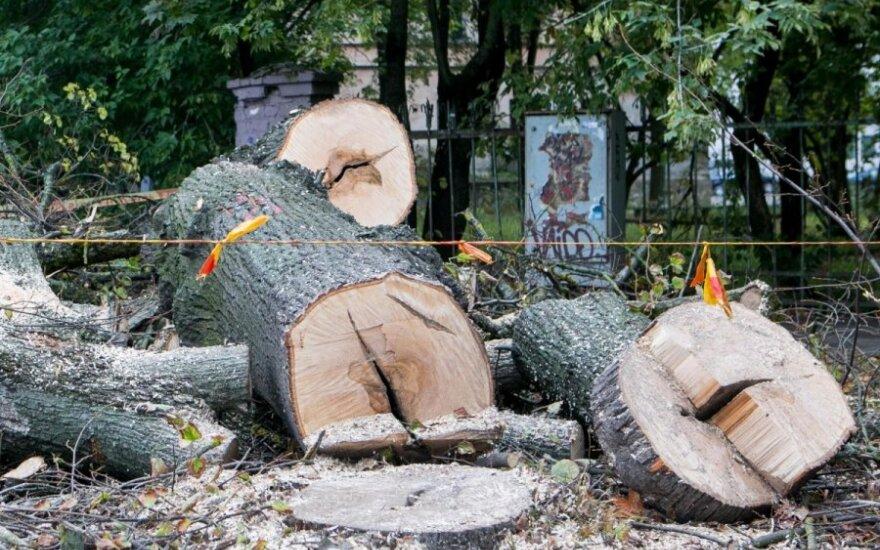 Klaipėdos K. Donelaičio gatvėje bus pasodinti nauji medžiai