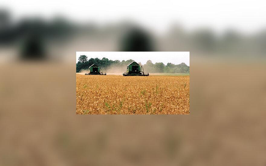 Žemės ūkis, javai, grūdai
