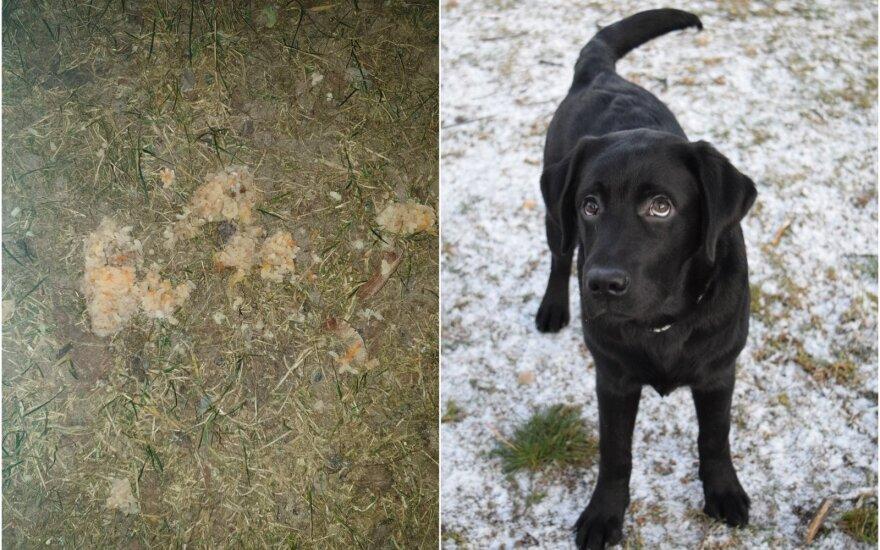 Anetos šuo Argo ir aptikti nuodai