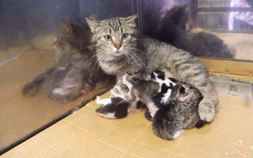 """Gyvybiškai skubu: katytė ir jos kačiukai – """"Grindoje"""""""