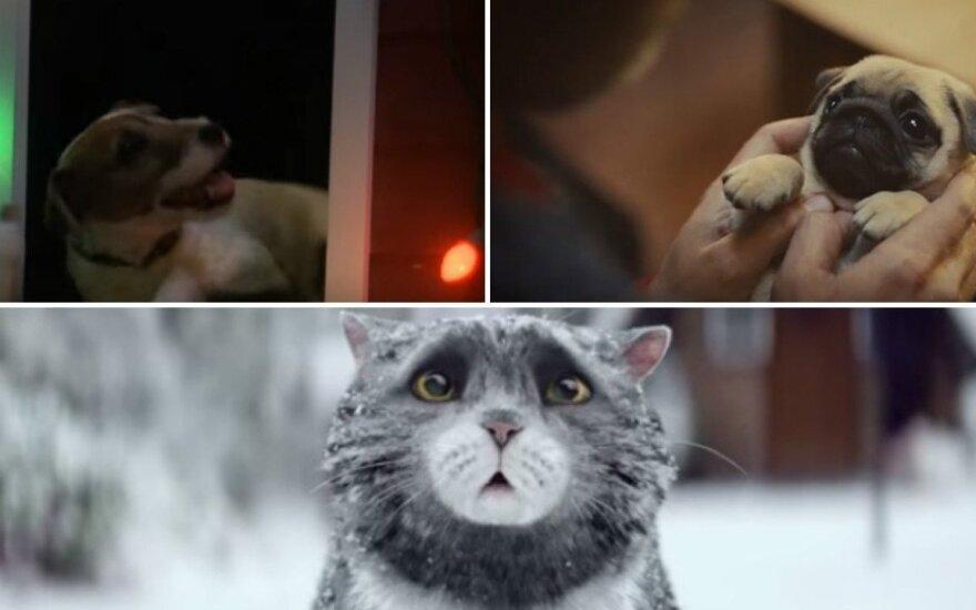 Mielos kalėdinės reklamos su gyvūnais
