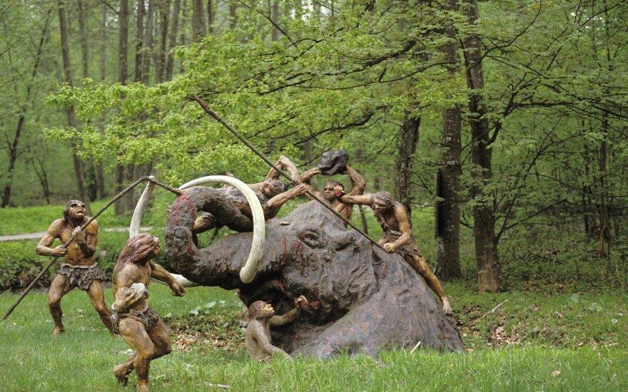 Neandertaliečiai sumedžiojo mamutą