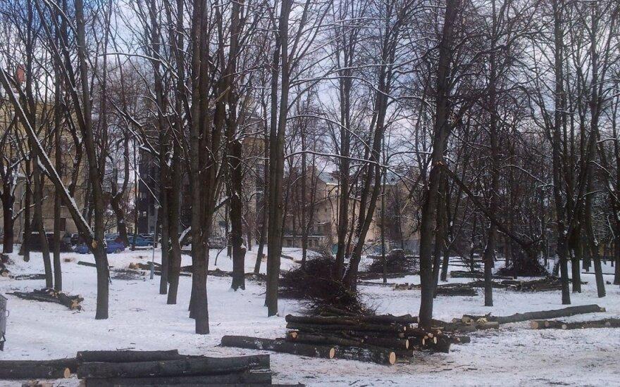 Reformatų skvere šiandien stipriai sumažėjo medžių