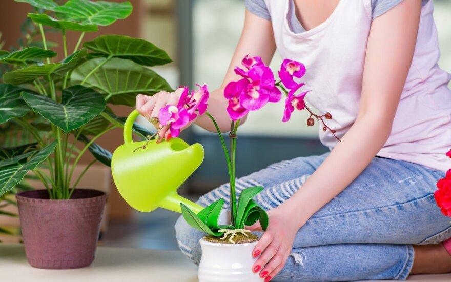 Gėlių laistymas