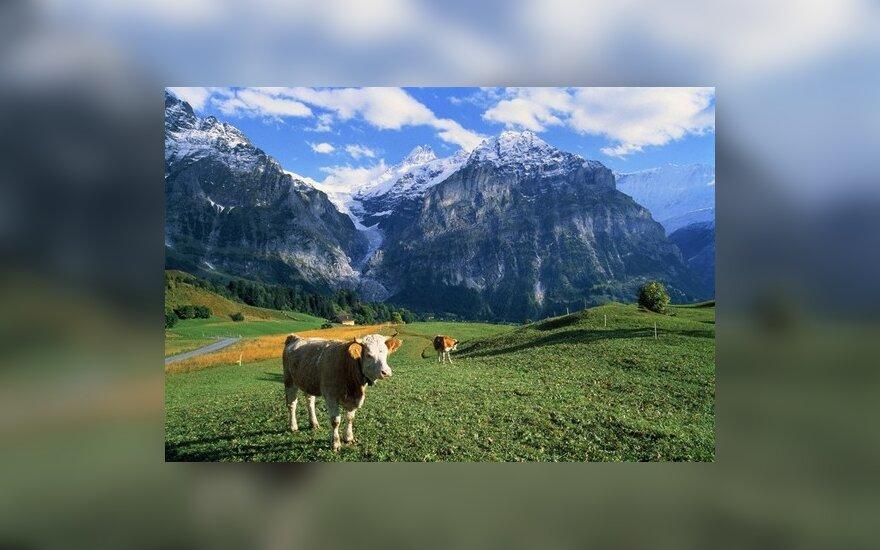 Kaip su krize kovoja šveicarai