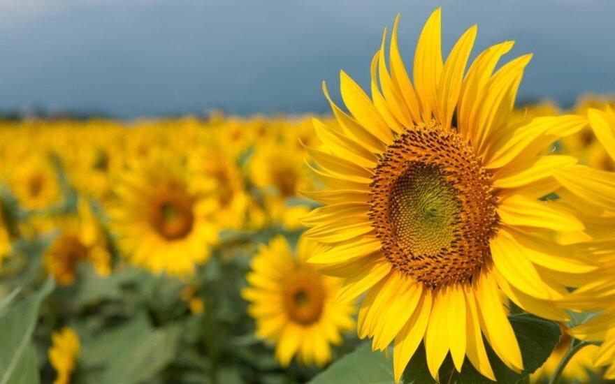 Lenkai dairosi į Ukrainą: laukia derlingų žemių pardavimo