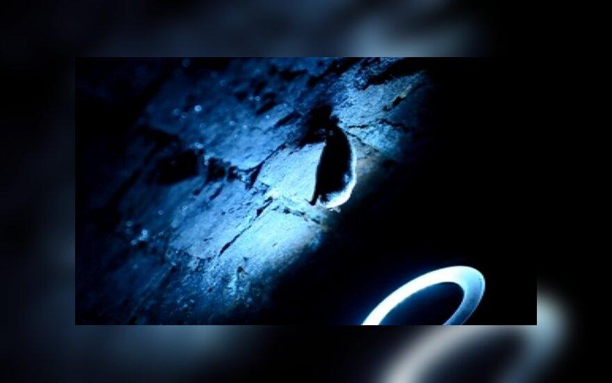 Naujieji forto šeimininkai - šikšnosparniai