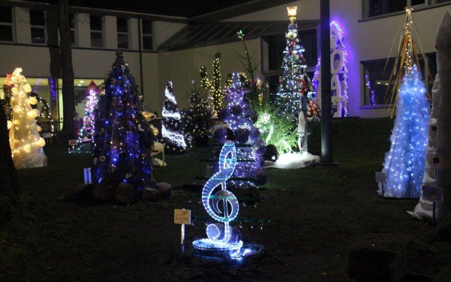 Antros tokios vietos Lietuvoje nėra: Klaipėdoje išdygo įspūdinga kalėdinių eglučių giraitė