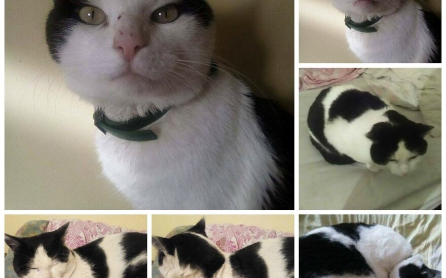 Skubus katino Pūkio pagalbos prašymas