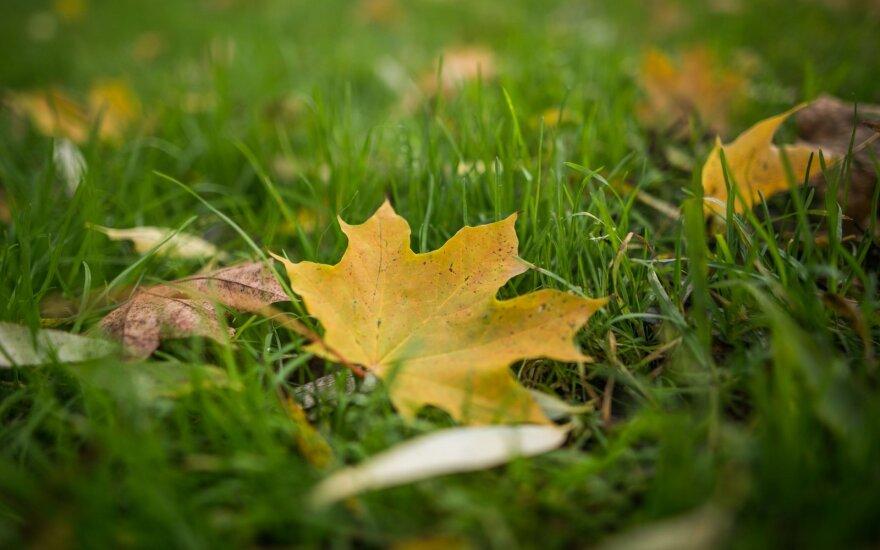 Vaikiškas klausimas – kodėl rudenį lapai pagelsta ir parausta?