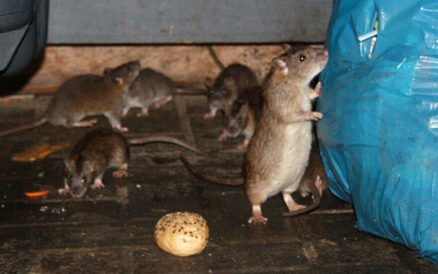 Pardavėjo išpažintis: ką daro su pasenusiomis prekėmis ir iš kur atsiranda žiurkės