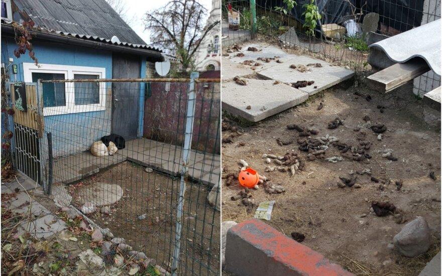 Šunų laikymo sąlygos Vilniuje, Kalvarijų gatvėje