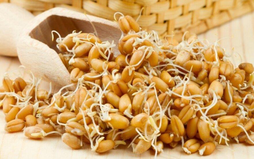 Redžiuvelaką galima gaminti iš daigintų kviečių