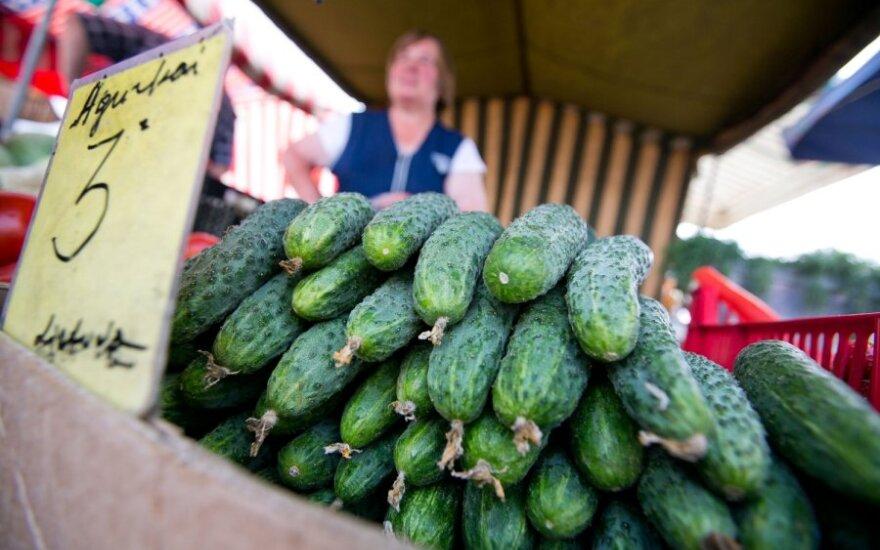Agurkų augintojai skundžiasi prastu derliumi
