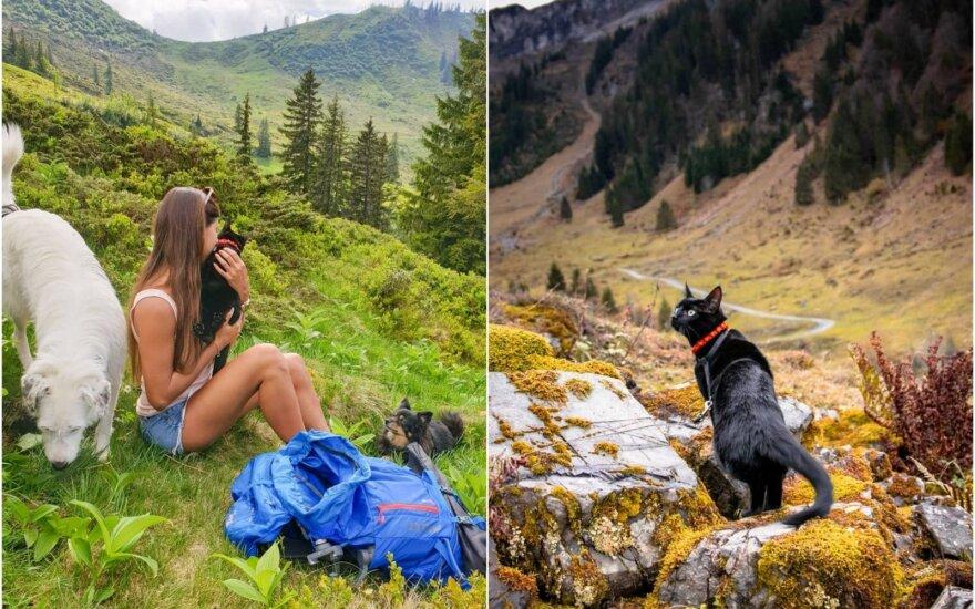 Ivetos ir jos augintinių kelionių akimirkos