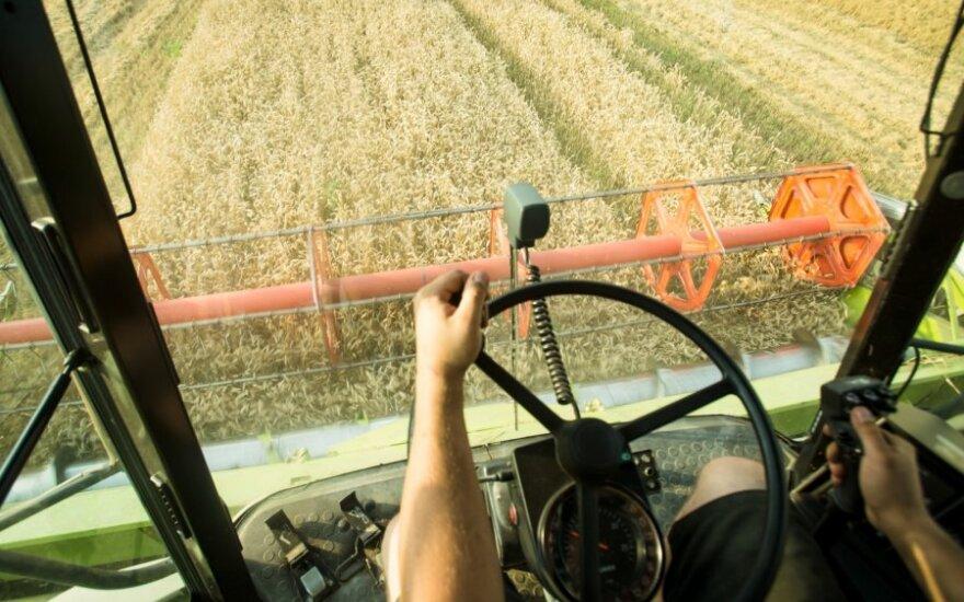 Grūdų derlius šiemet bus 4,7 proc. menkesnis