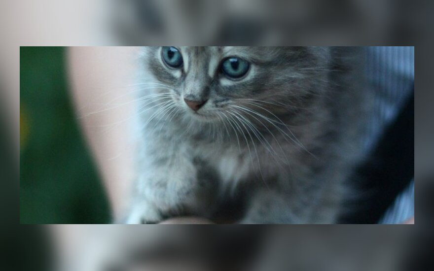 Maži kačiukai gatvėje laukia išsigelbėjimo!