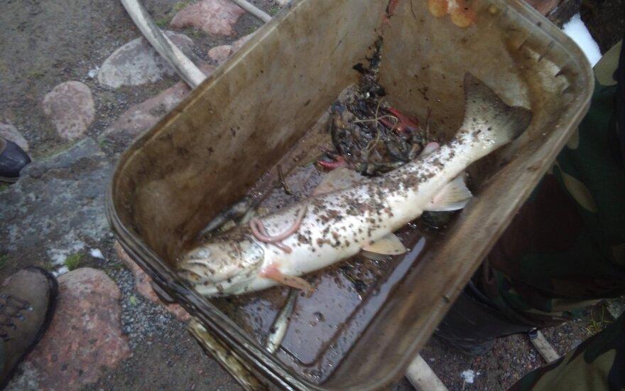 Suirus užtvankai žuvų išgelbėti nepavyko