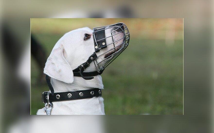 Šuo su antsnukiu